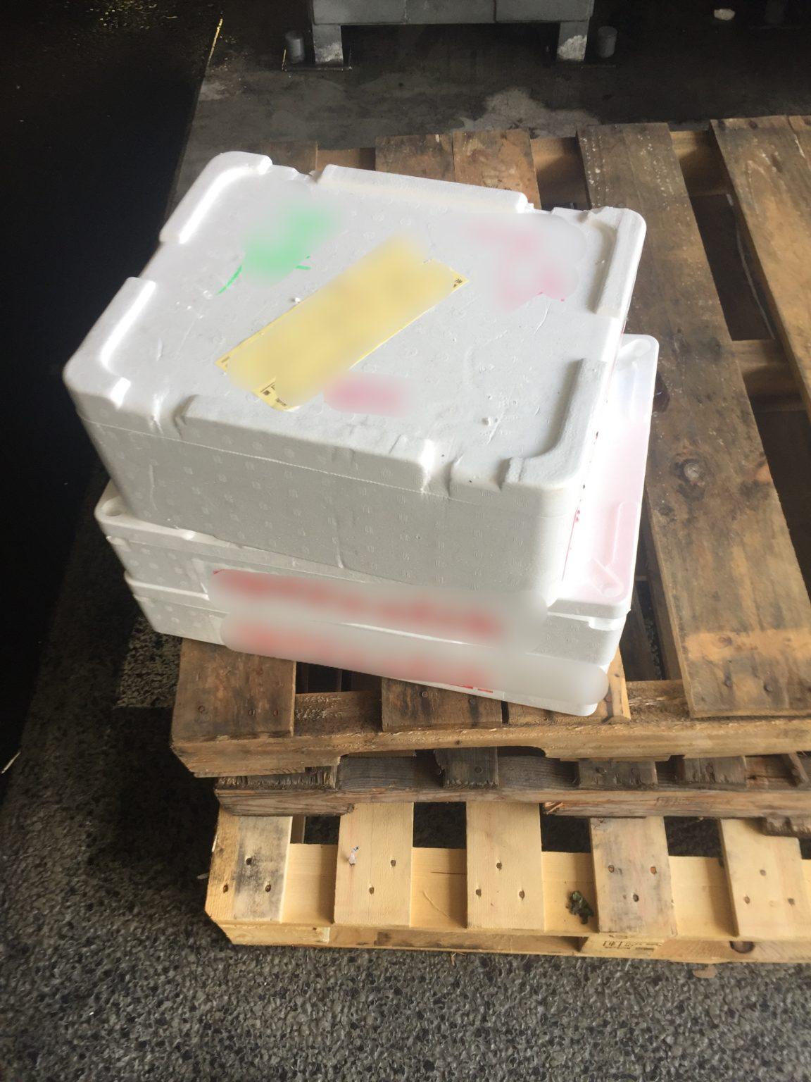 豊洲市場で軽貨物 【軽貨物運送の検証ブログ】