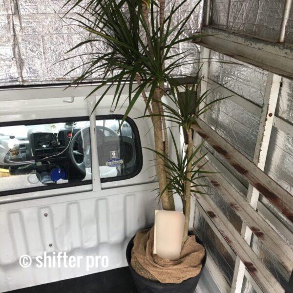千葉県で観葉植物配送のチャーター